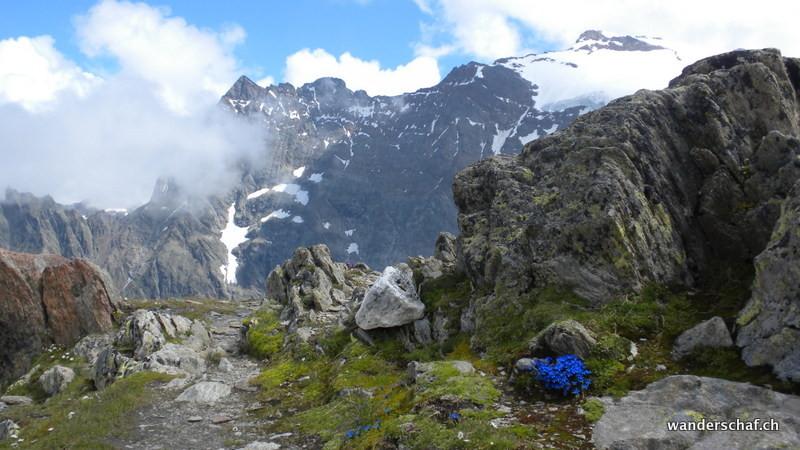 Blumenpracht in der Gletscherwelt