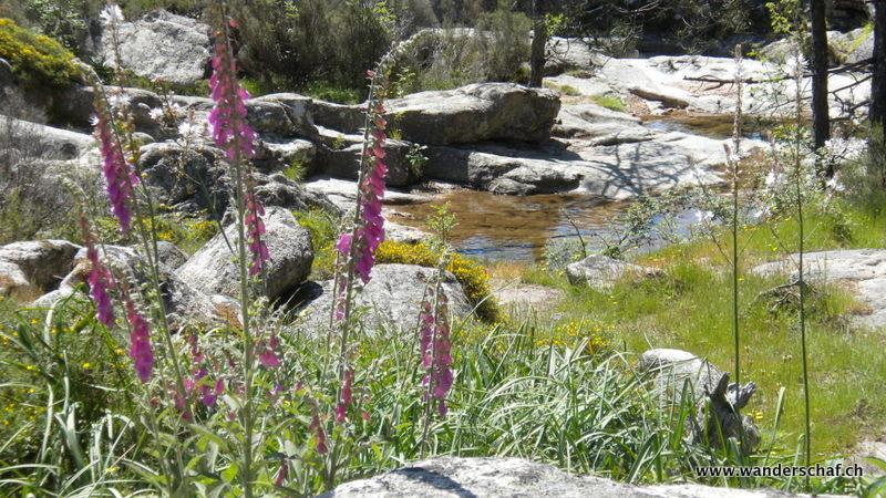 unsere Wanderung zum Piscia di Gallo