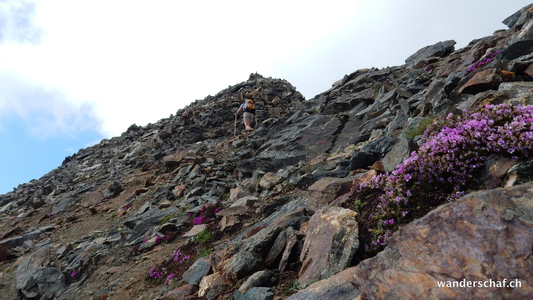 im Aufstieg zum Nollenhorn