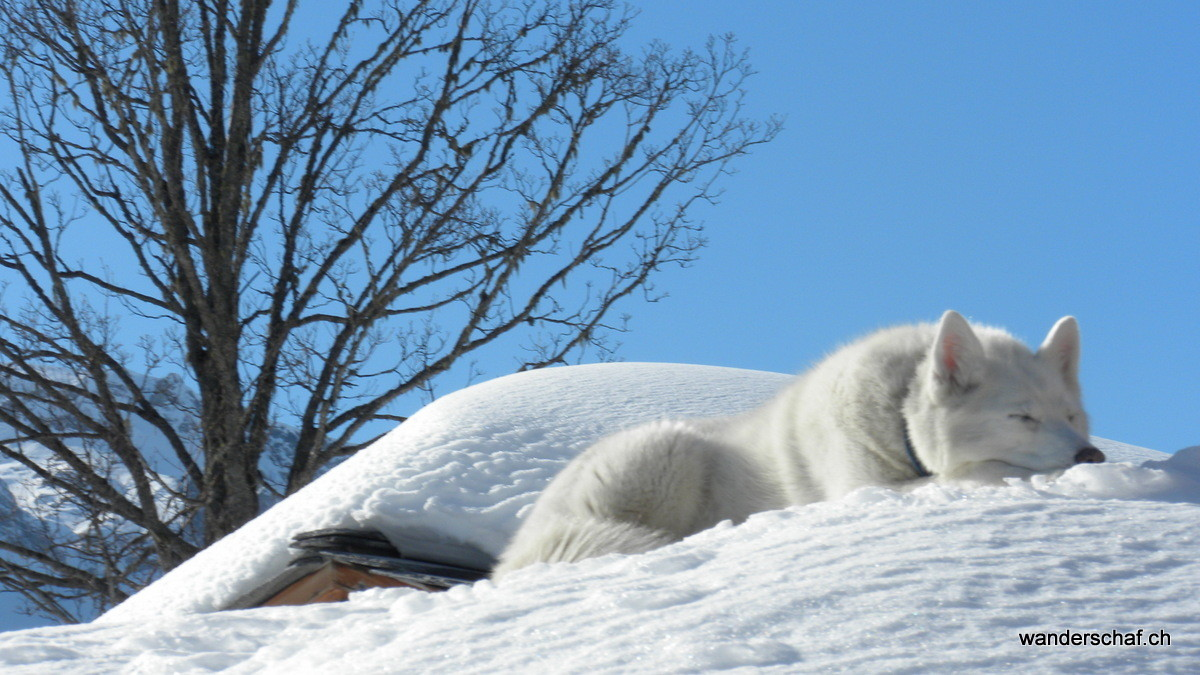 der findet's auch toll im Schnee ;o)