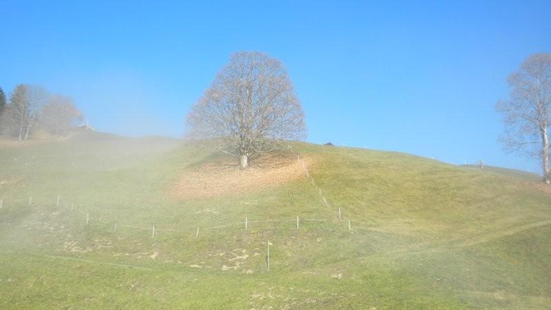 im Aufstieg unterhalb Bröndlisegg...endlich verzieht sich der Nebel