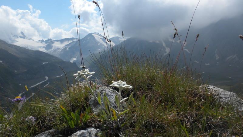 Blick zum Hohsandhorn