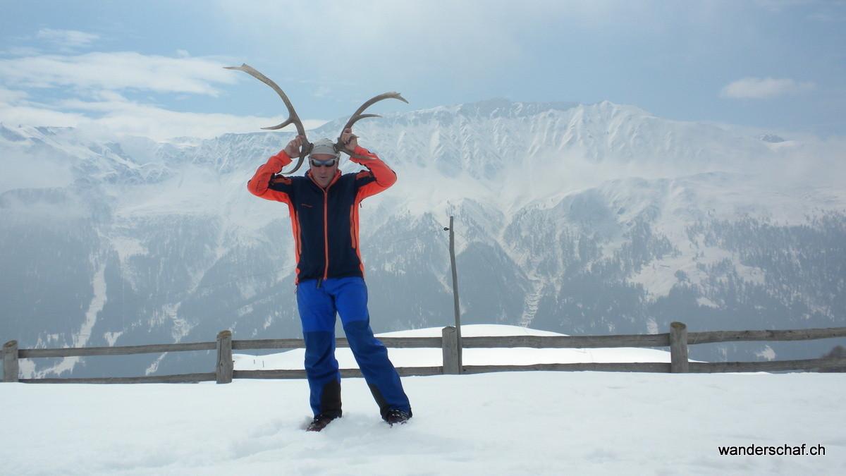 Pro Specie Rara: brünftiger Mammut-Hirsch auf der Alp Valmorain ;o)