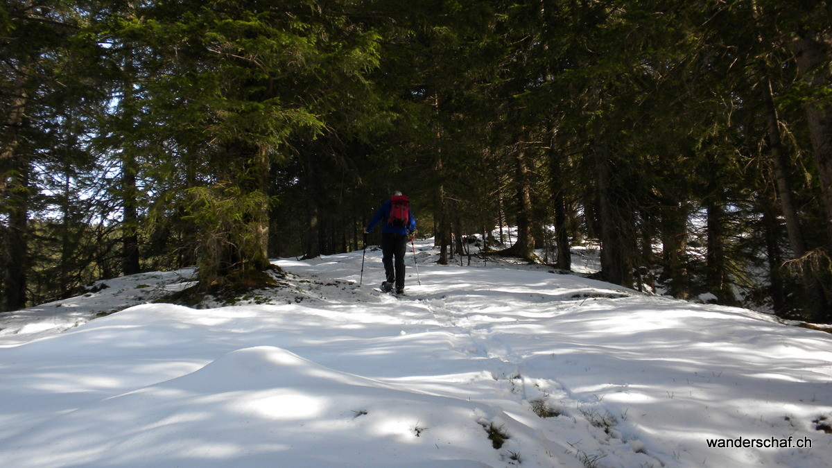Waldstück Richtung Sagematt