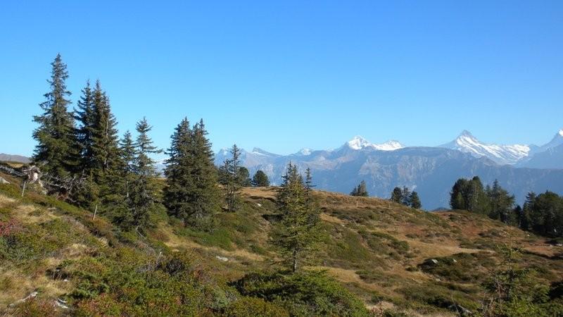 schöne Aussicht auf die Berner Alpen