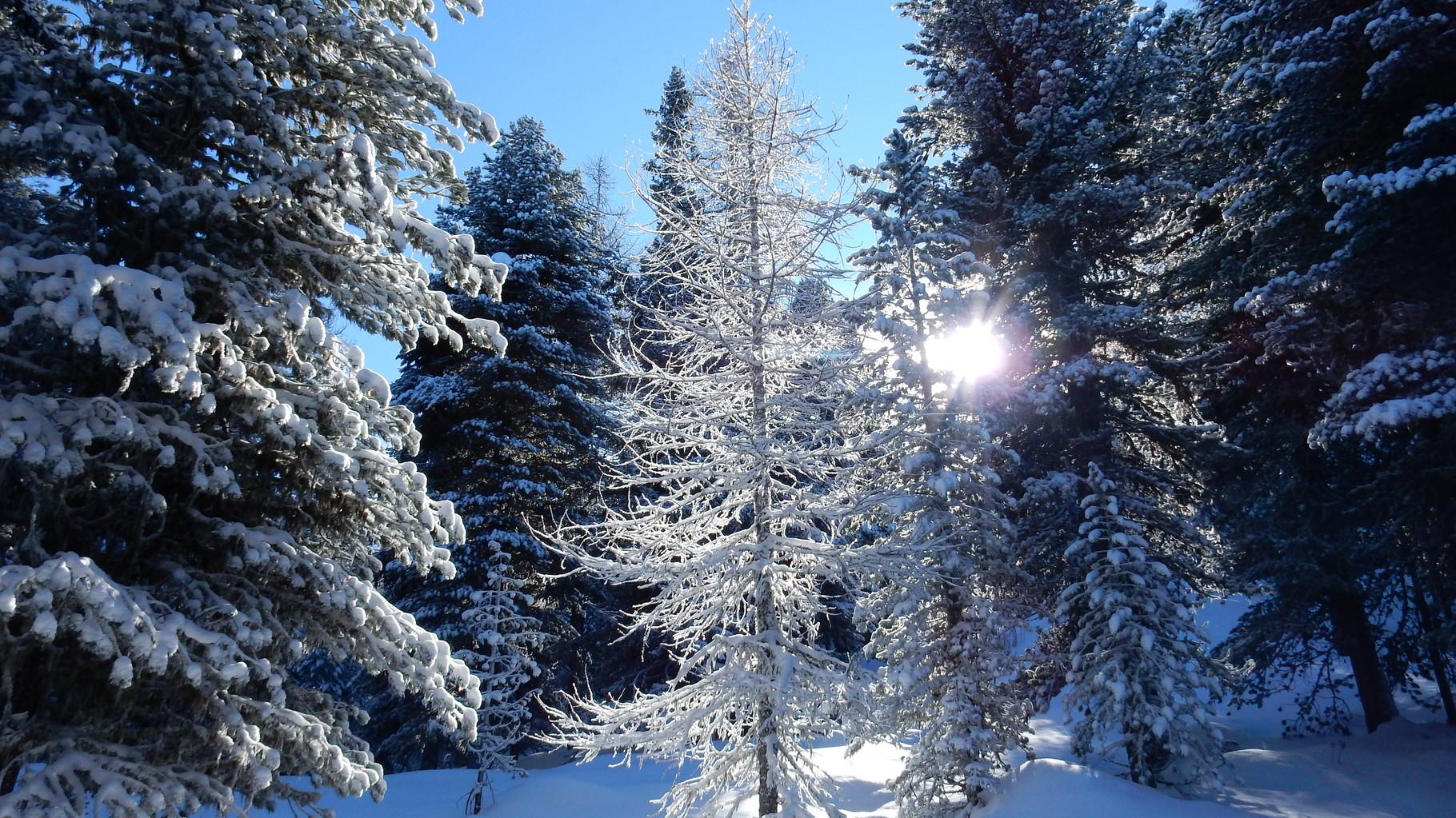 Das nennt man Winter!
