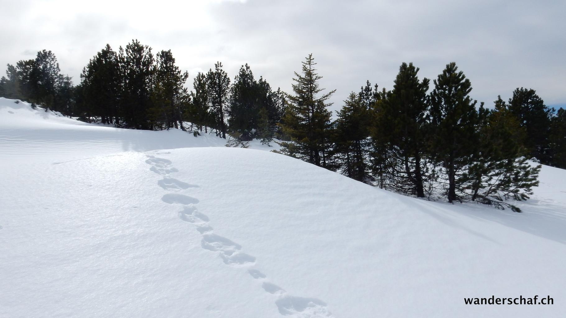 Abstieg über Trogenegg