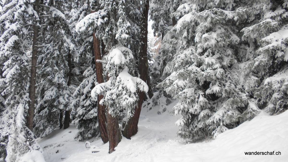 Leemegga Wald