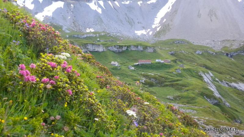 letzter Blick zurück zur Alp