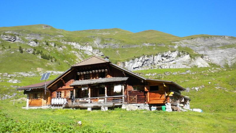 Alp Suls