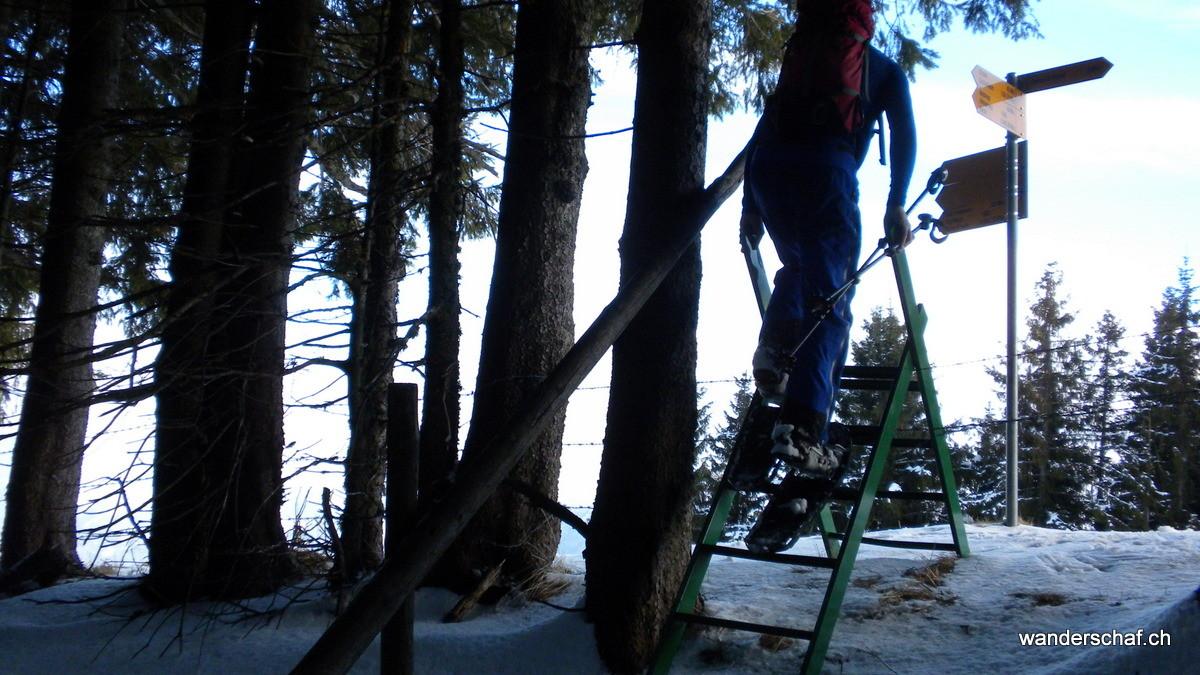 nach dem steilen Waldstück durch Oberstole