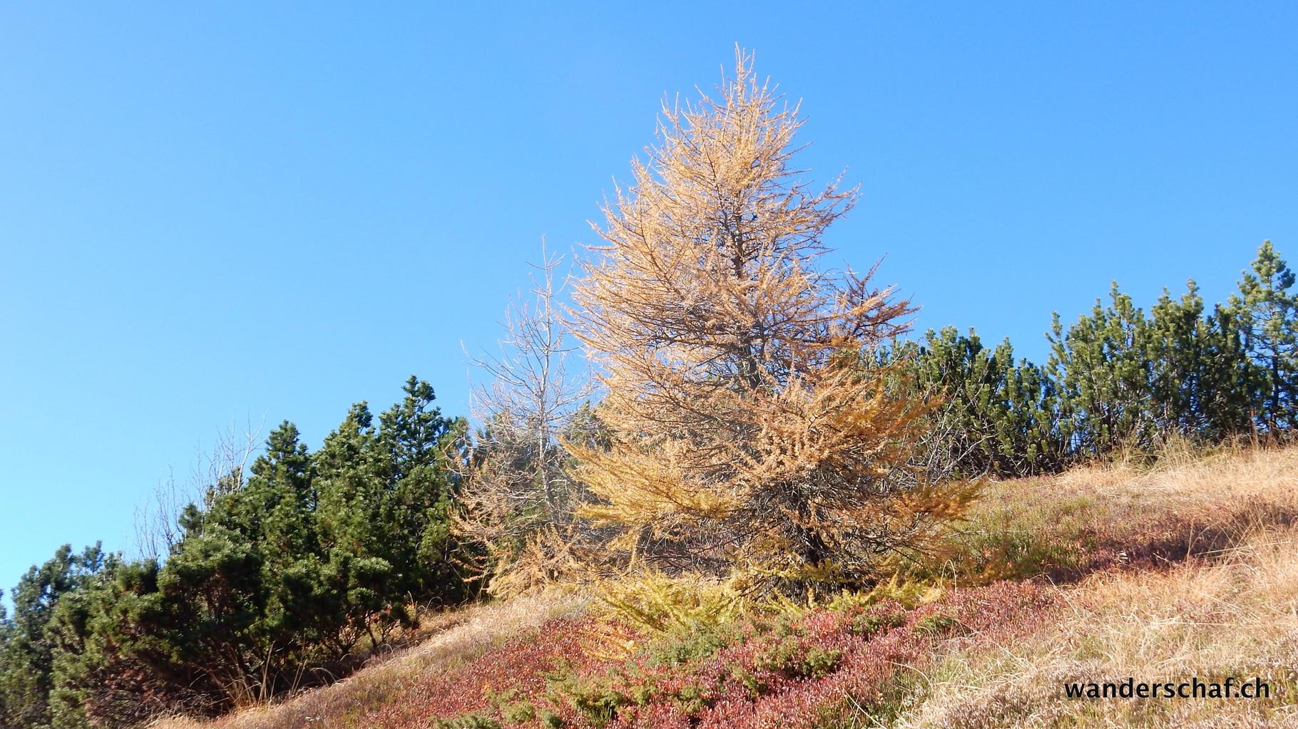 farbenprächtige Herbstkulisse
