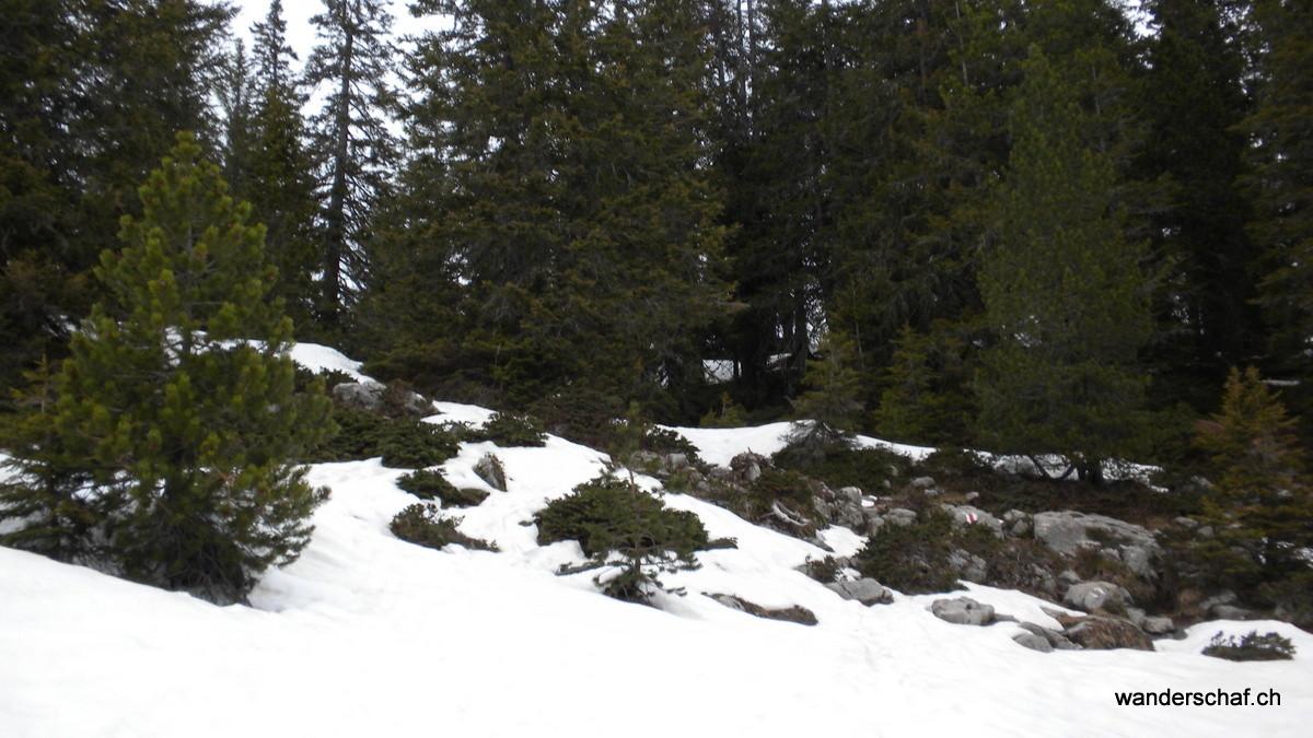 wenig Schnee im Waldstück