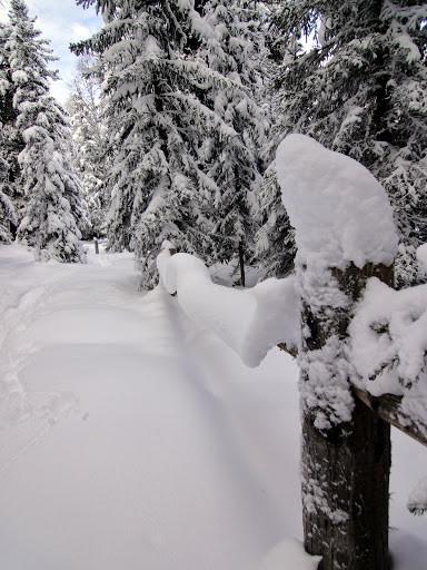 von Bürchen geht's durch den verschneiten Wald