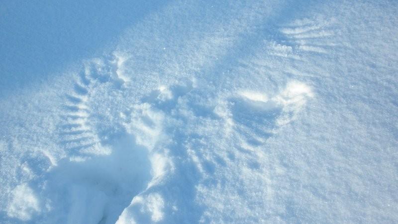auch Vögel machen Schneeengel ;o)