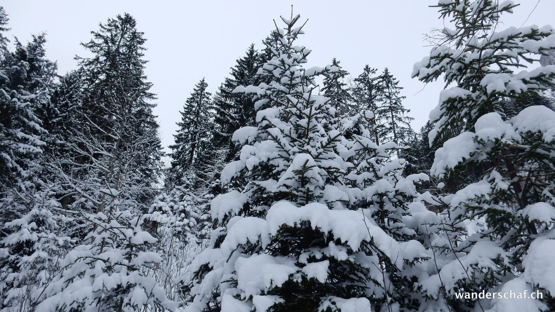 wunderschön verschneit