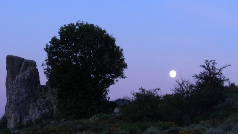 Vollmond in der Morgendämmerung