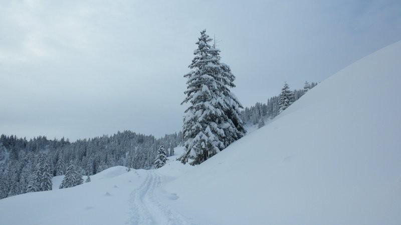 bei der Alp Rohr