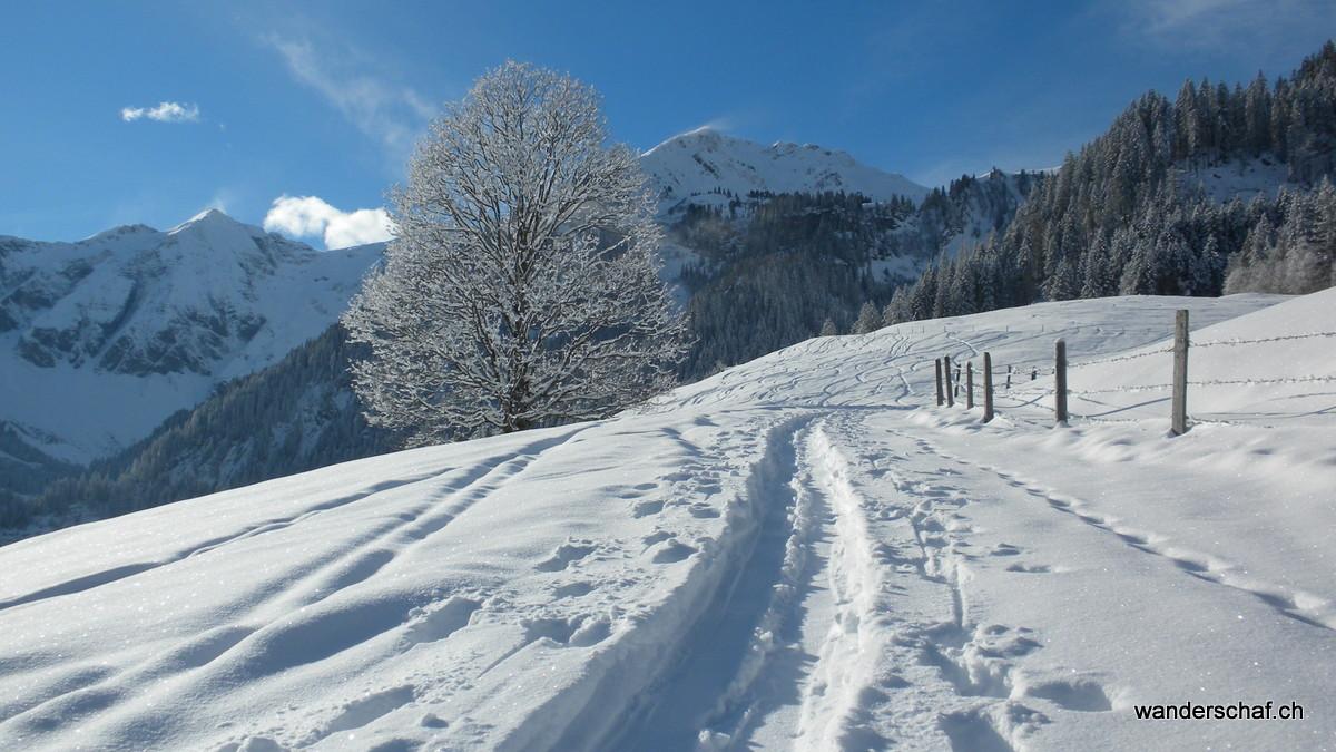 bei der Alp Gurschwald schein schon die Sonne
