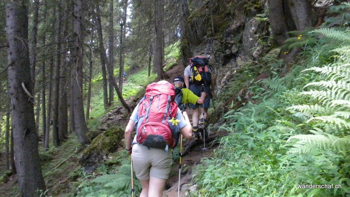 angenehmer Aufstieg druch den schattigen Wald Richtung Sunniggrätlihütte