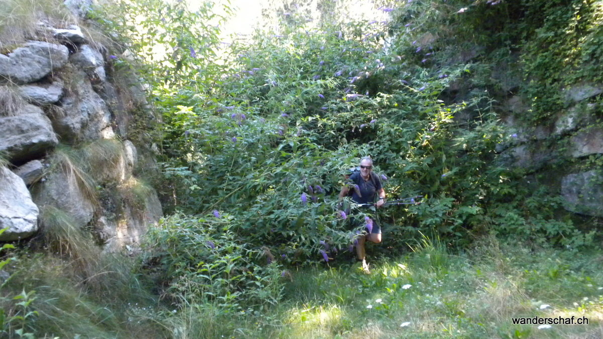 mitgenommen, von Ästen und Dornen gezeichnet, haben wir doch noch einen Weg durch das Dickicht gefunden
