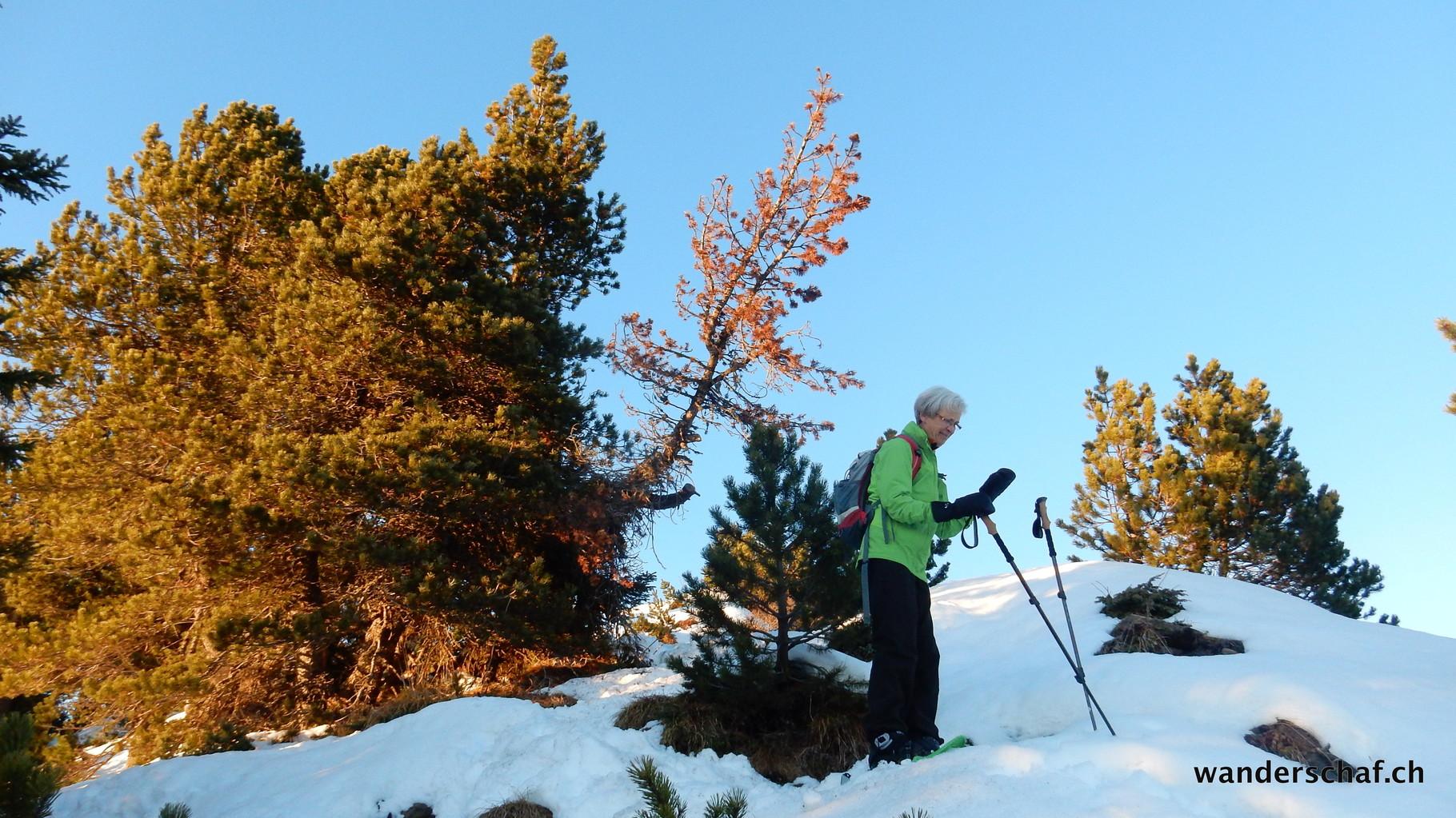 über den Grat geht's runter Richtung Seewenegg