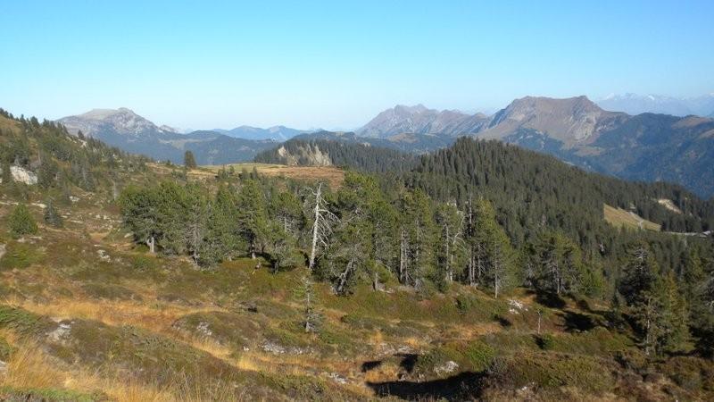 schöne Hochmoorähnliche Landschaft
