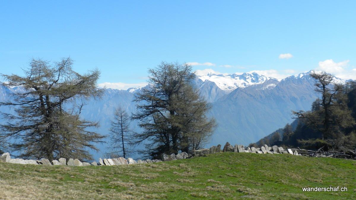 Blick zur Berninagruppe