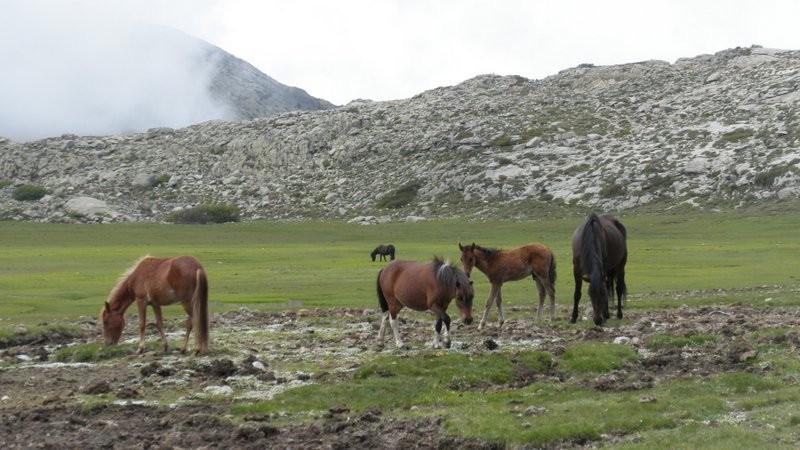 auch die Pferde kommen nun etwas näher