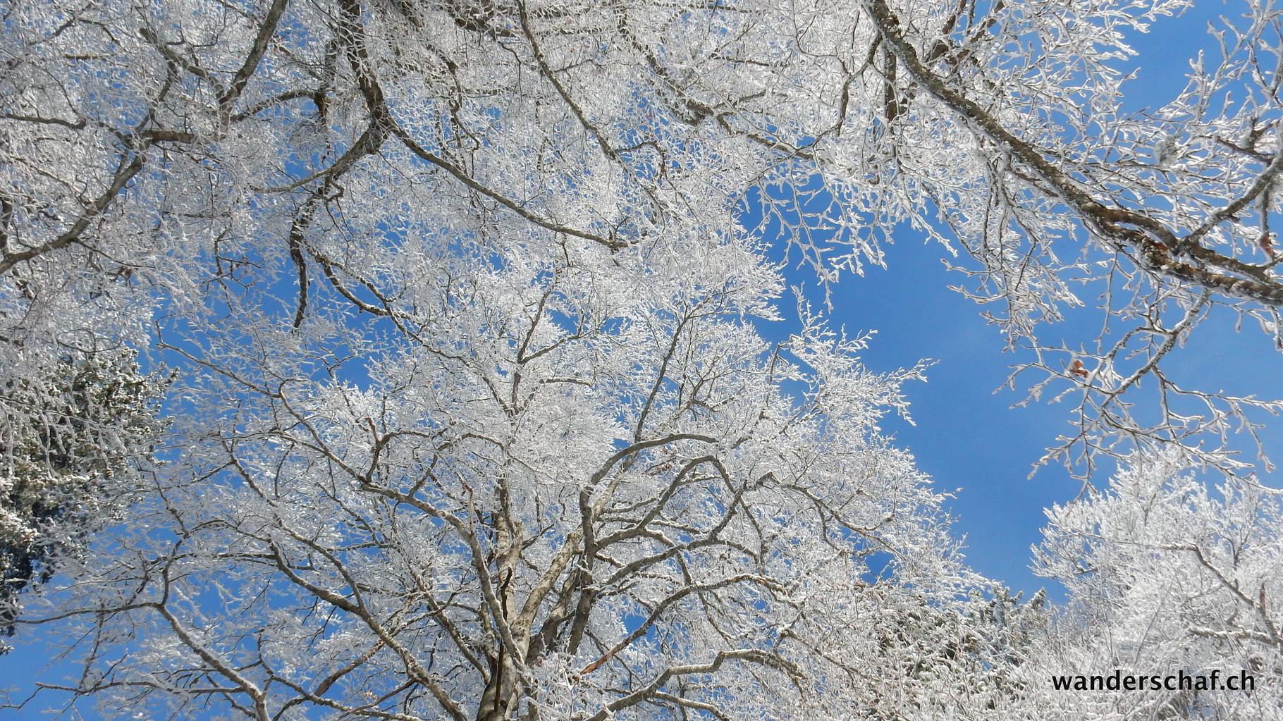 in Biel noch Nebel aber oberhalb Prés-d'Orvin ist blauer Himmel