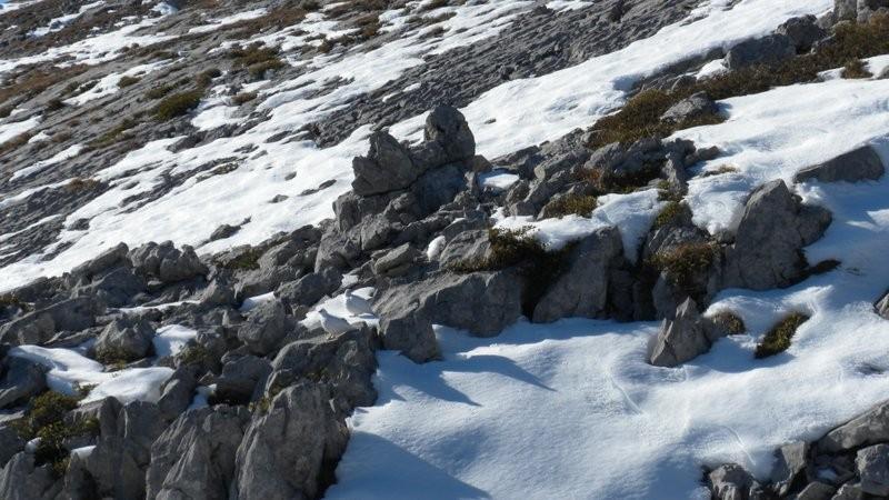 Schneehühner Begegnung im Aufstieg
