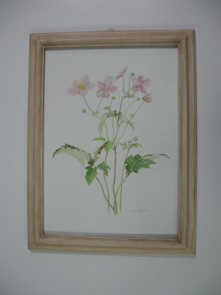 Stampa botanica con cornice sagomata tinta avorio anticato, passepartout a smusso.