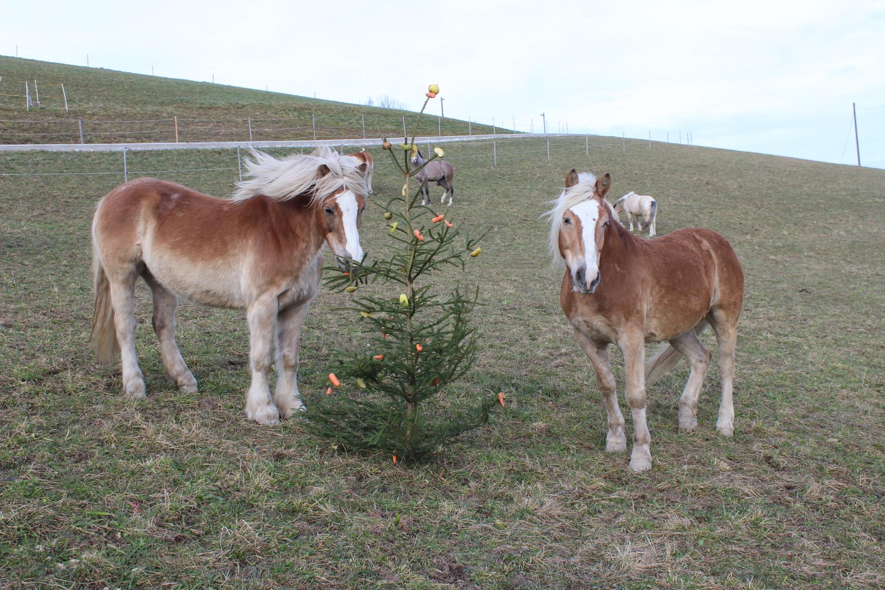 Frohe Weihnachten Pferd.Frohe Weihnachten Reitpanorama Forstner