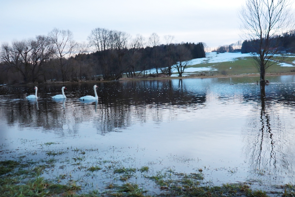 D'Michl wird zum Schwanensee Januar '21