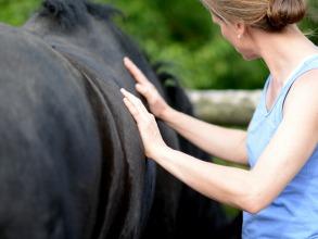 Faszientherapie am Pferd