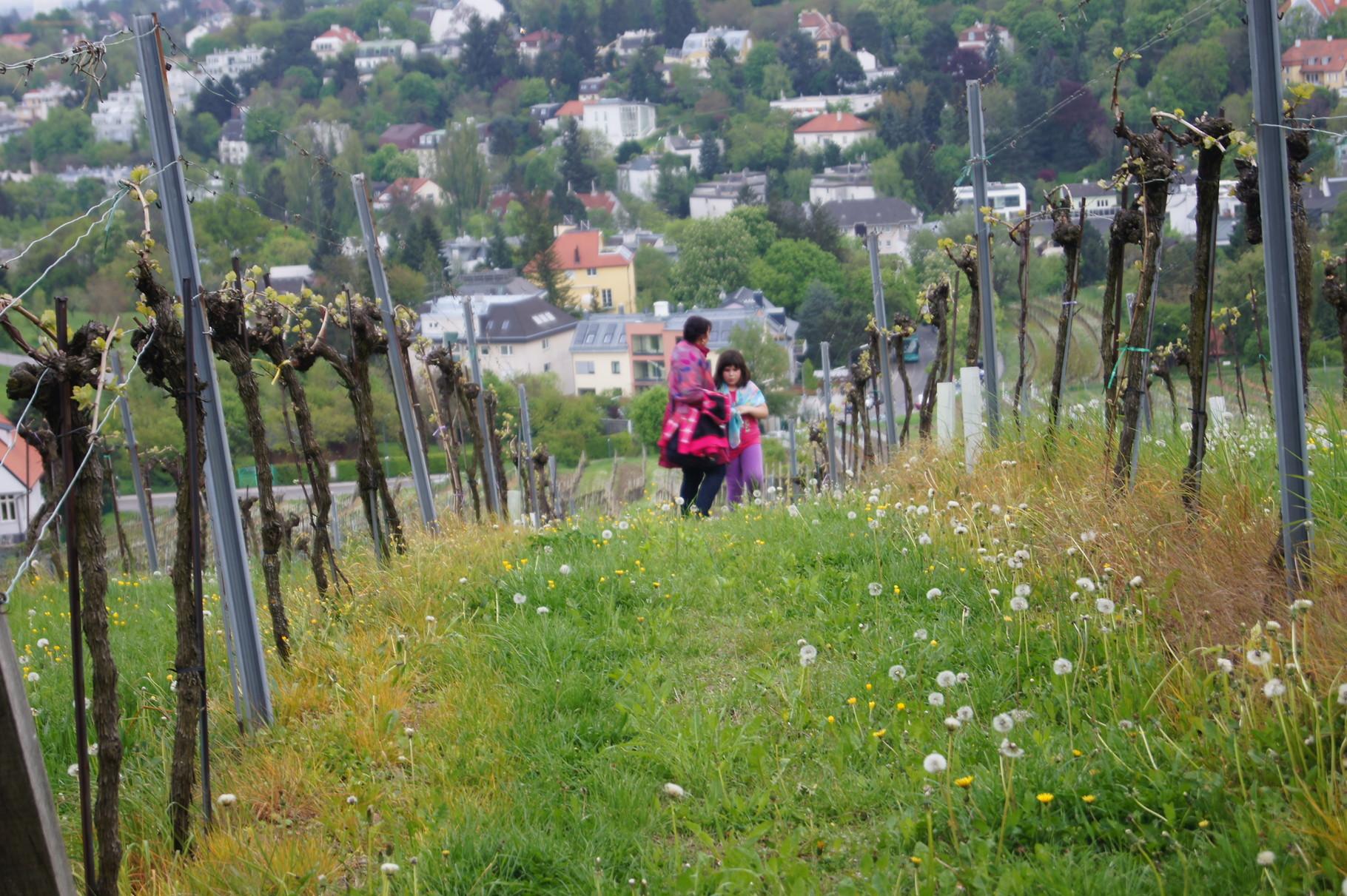 Im Weinberg am Wienerwald