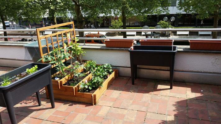 Unsere Terrasse wird immer schöner! Die neuen Pflanzen wachsen und wachsen. Kommt uns besuchen und freut euch mit uns!