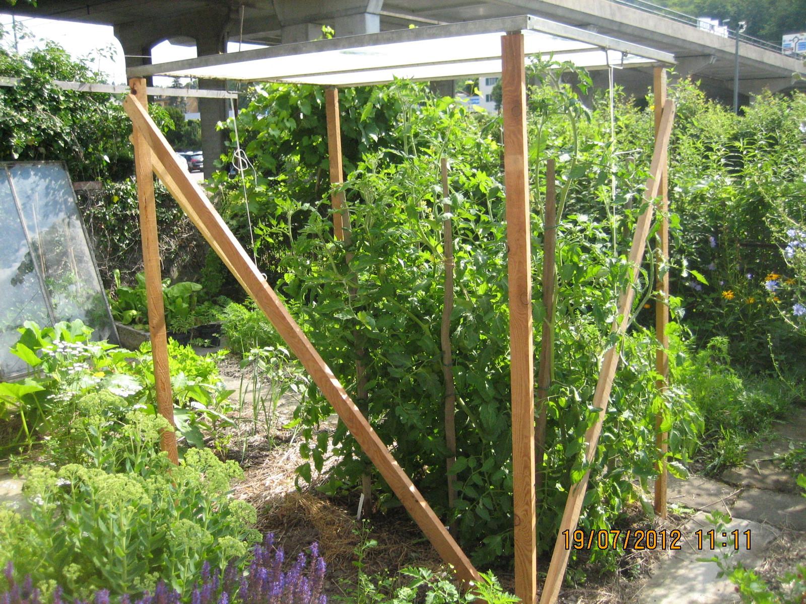 Treibbeetfenster für Tomaten