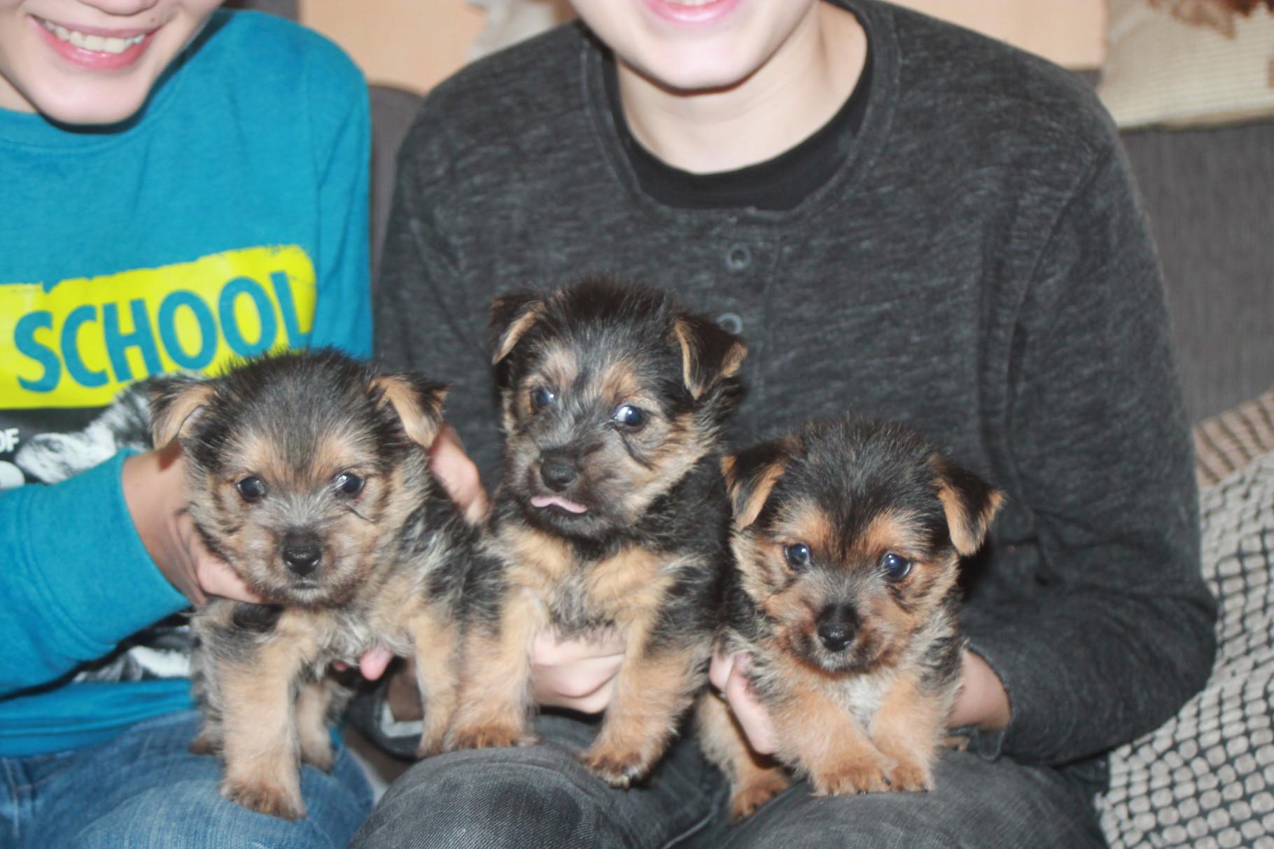 von links:Duke, Dolly, Debbie