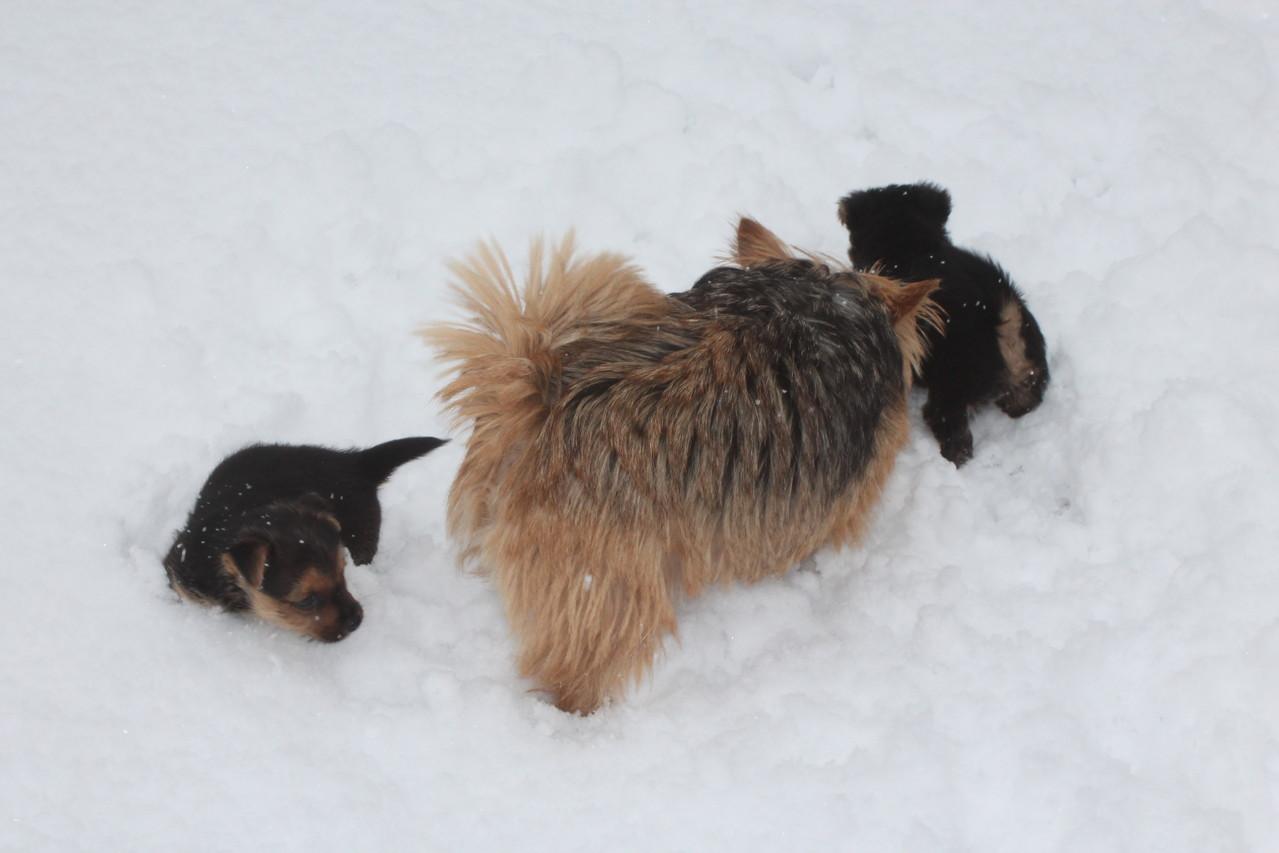 Der erste Schnee mit Mama Katie ......