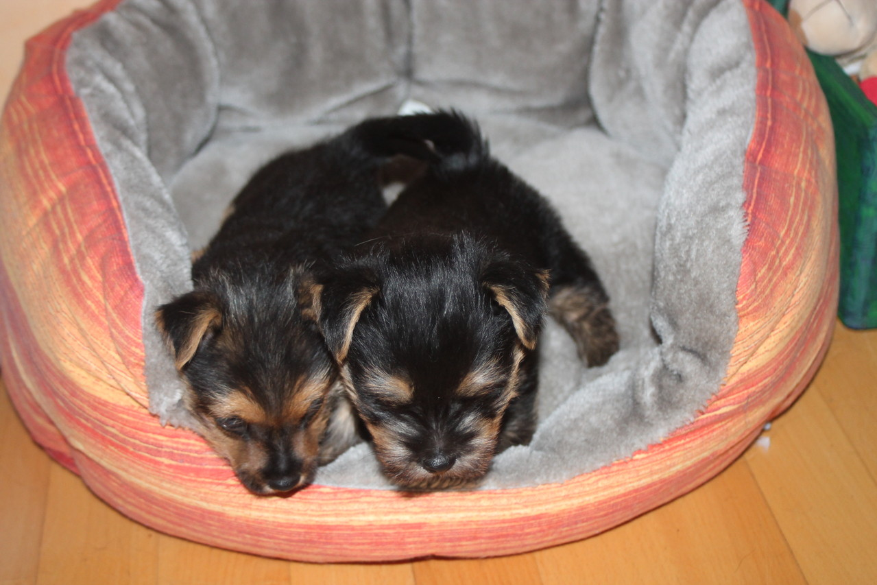 links Bolle + rechts Bailey