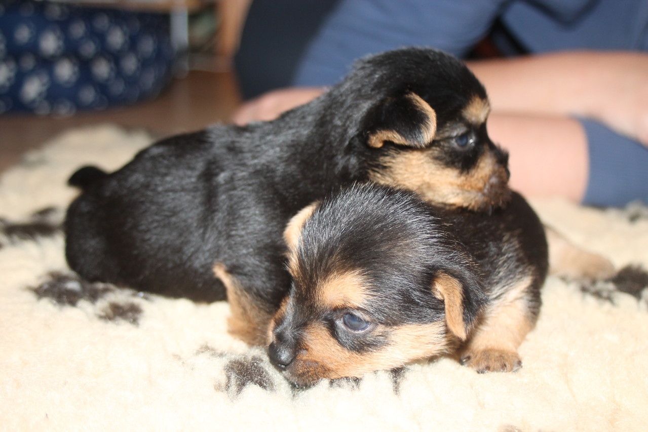 links Bailey + rechts Bolle