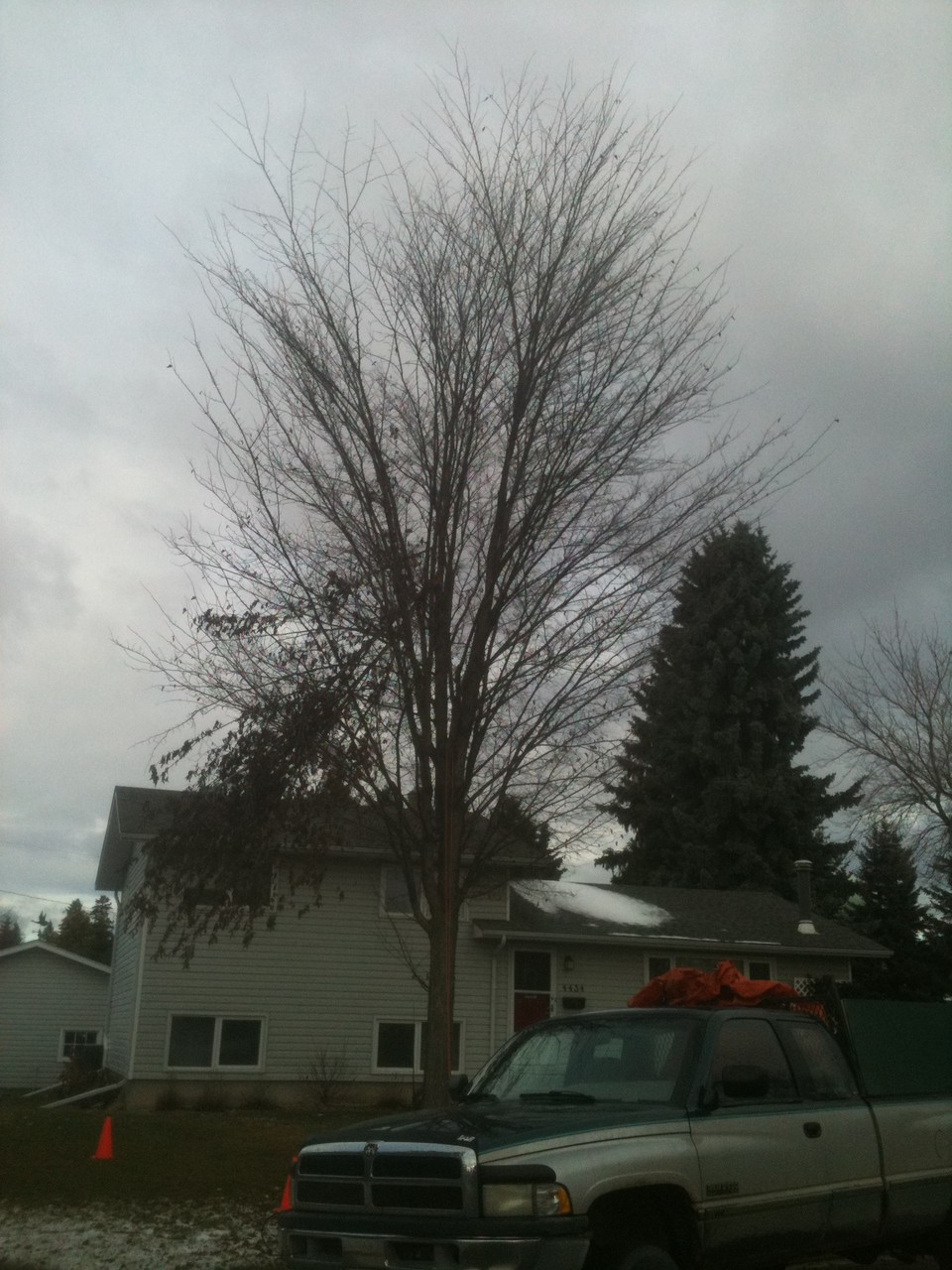 An approximately 25 year old American Elm suffered storm damage and an over crouded canopy