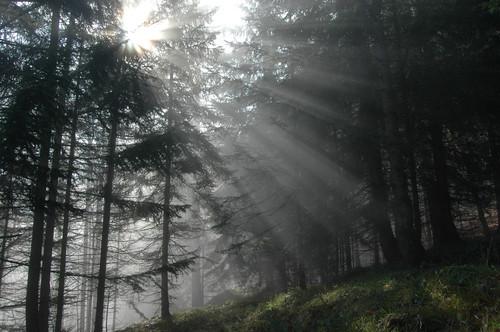 Licht, Hoffnung, Gewissheit der Liebe