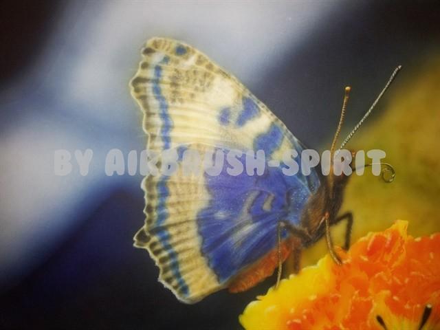 Schmetterling - 02/2013 - auf Airbrush-Karton - nach einer Fotovorlage von Klaus Eppele