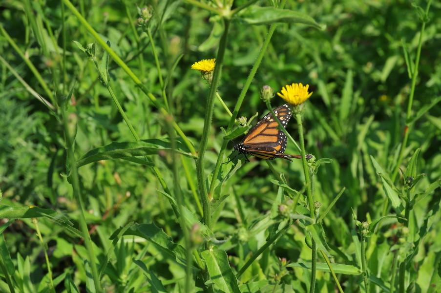 Auch die Schmetterlinge sind größer als bei uns zu Hause