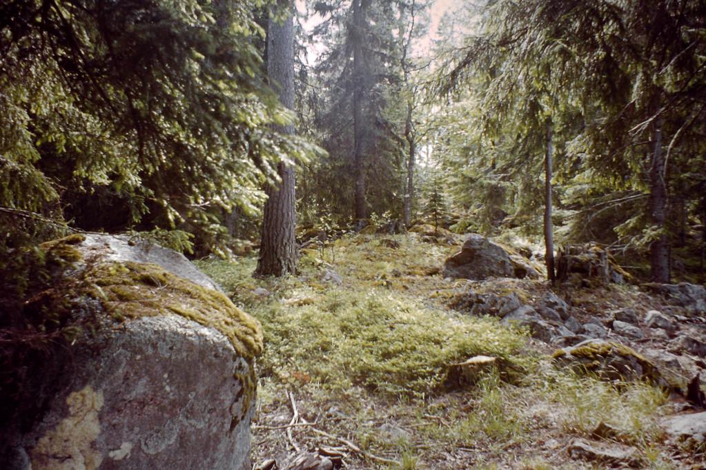 schwedischer Wald