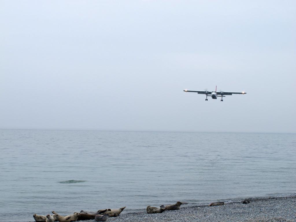 an tieffliegende Flugzeuge haben sich die Robben gewöhnt
