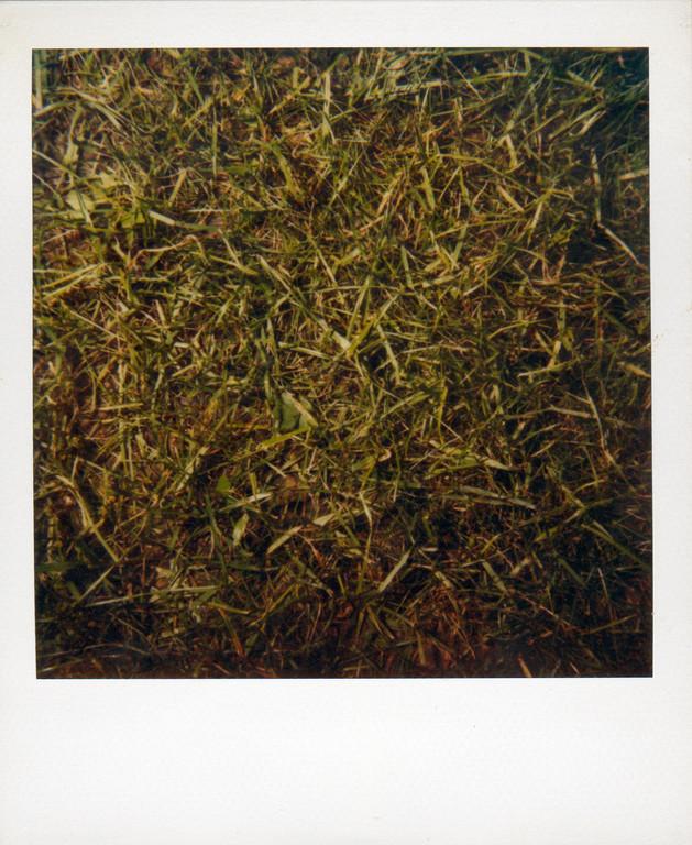 Gras, 1991