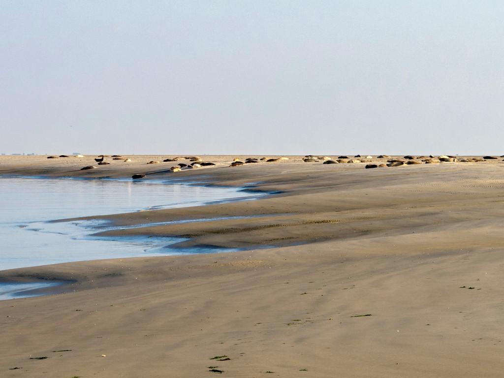 Seehunde in der Nähe des Badestrandes